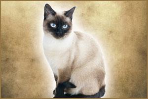 Новая коллекция — кошачья