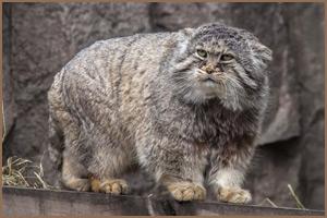 Новая коллекция по кошачьим