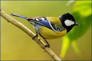 Коллекция к Международному дню птиц