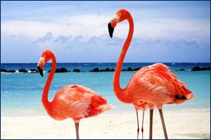 Добавлена коллекция «Птицы мира»